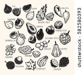 set of hand drawn vector exotic ... | Shutterstock .eps vector #582580393