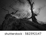 trunk and branch of tree in...   Shutterstock . vector #582592147