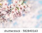 cherry blossom trees  nature... | Shutterstock . vector #582840163