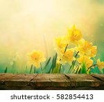 daffodil floral spring... | Shutterstock . vector #582854413