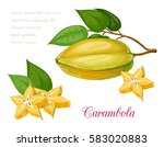 vector illustration of tropical ... | Shutterstock .eps vector #583020883