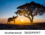 silhouette asian elephant on... | Shutterstock . vector #583099597