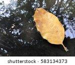 Single Dry Leaf Falling Down...