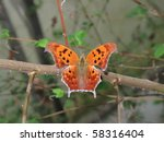 comma butterfly with open wings ... | Shutterstock . vector #58316404