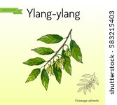 branch of ylang ylang with... | Shutterstock .eps vector #583215403