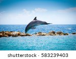 jumping dolphins in the sea | Shutterstock . vector #583239403