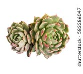 succulent plant isolated on... | Shutterstock . vector #583286047