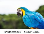 Blue Macaw Parrot On Nature...