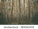 dark moody forest with birch... | Shutterstock . vector #583362433