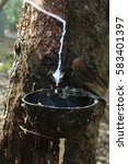 Small photo of Milk latex from rubber tree in a bowl at the rubber plantation of agriculturist in Kerala, India