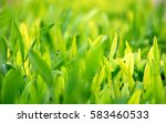 young green leaves  springtime  ... | Shutterstock . vector #583460533
