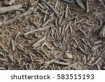 earth covered with dry fallen... | Shutterstock . vector #583515193