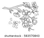 cherry blossom coloring book... | Shutterstock .eps vector #583570843
