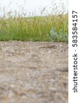 dirt gravel road and wayside... | Shutterstock . vector #583584157
