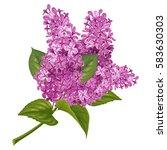 Spring Flowers. Gentle Fragran...