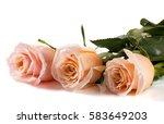 Three Fresh Beige Roses...