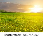 Green Field With Dandelions At...