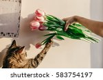 Cute Cat Playing With Tulips I...