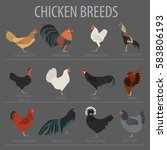 poultry farming. chicken breeds ... | Shutterstock .eps vector #583806193