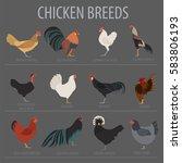 poultry farming. chicken breeds ... | Shutterstock .eps vector #583806193