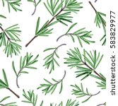 rosemary herb. watercolor... | Shutterstock . vector #583829977