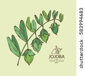 background with jojoba nuts and ... | Shutterstock .eps vector #583994683