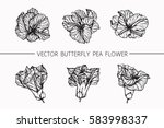 vector collection set of... | Shutterstock .eps vector #583998337