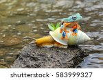 flying frog  tree frog  frog on ... | Shutterstock . vector #583999327