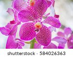 Pink And Red Orchid Macro