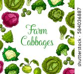 cabbages vector vegetables with ... | Shutterstock .eps vector #584036887