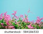 The Pwgchmpo.flower Vine.flowe...
