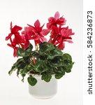 flower pot  cyclamen  cyclamen...   Shutterstock . vector #584236873