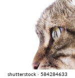 pretty cat  brown tabby version ... | Shutterstock . vector #584284633