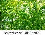leaves of fresh green. leaves... | Shutterstock . vector #584372803