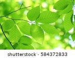 leaves of fresh green. leaves... | Shutterstock . vector #584372833