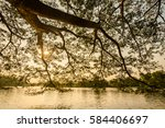 Small photo of Trees in the park extended its branches extending to the lake.