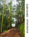 footpath in a dense rain forest | Shutterstock . vector #584414893