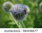 Bumblebee Pollinating Small...