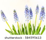 Blur Background Of Plant Sprin...