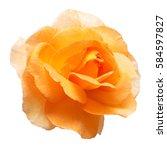 Beautiful yellow rose flower...