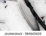 transparent pigeon feathers. | Shutterstock . vector #584665633