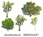 set of green oak trees isolated ... | Shutterstock . vector #584941447
