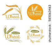 yellow paddy wheat rice organic ... | Shutterstock .eps vector #585063463