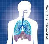 human system respiratory vector ... | Shutterstock .eps vector #585106957
