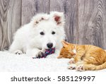 berger blanc suisse puppy and... | Shutterstock . vector #585129997
