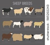 sheep breed icon set. farm... | Shutterstock .eps vector #585202243