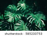 tropical leaves background | Shutterstock . vector #585233753
