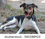 brazilian fox terrier | Shutterstock . vector #585288923