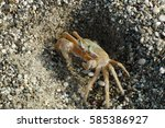 Small photo of Ghost Crab, Ocypode decapoda, on the Beach of Karpathos, Greece