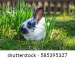 baby white rabbit on green...   Shutterstock . vector #585395327
